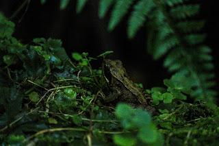 Frog by Benjamin Akira Tallamy