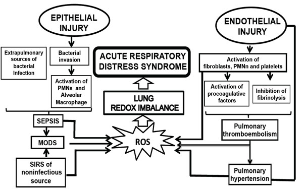 Pathophysiological Approaches of Acute Respiratory
