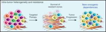 Tumor heterogeneity and resistance From Ramos and Bentires-Alj. Oncogene 2014