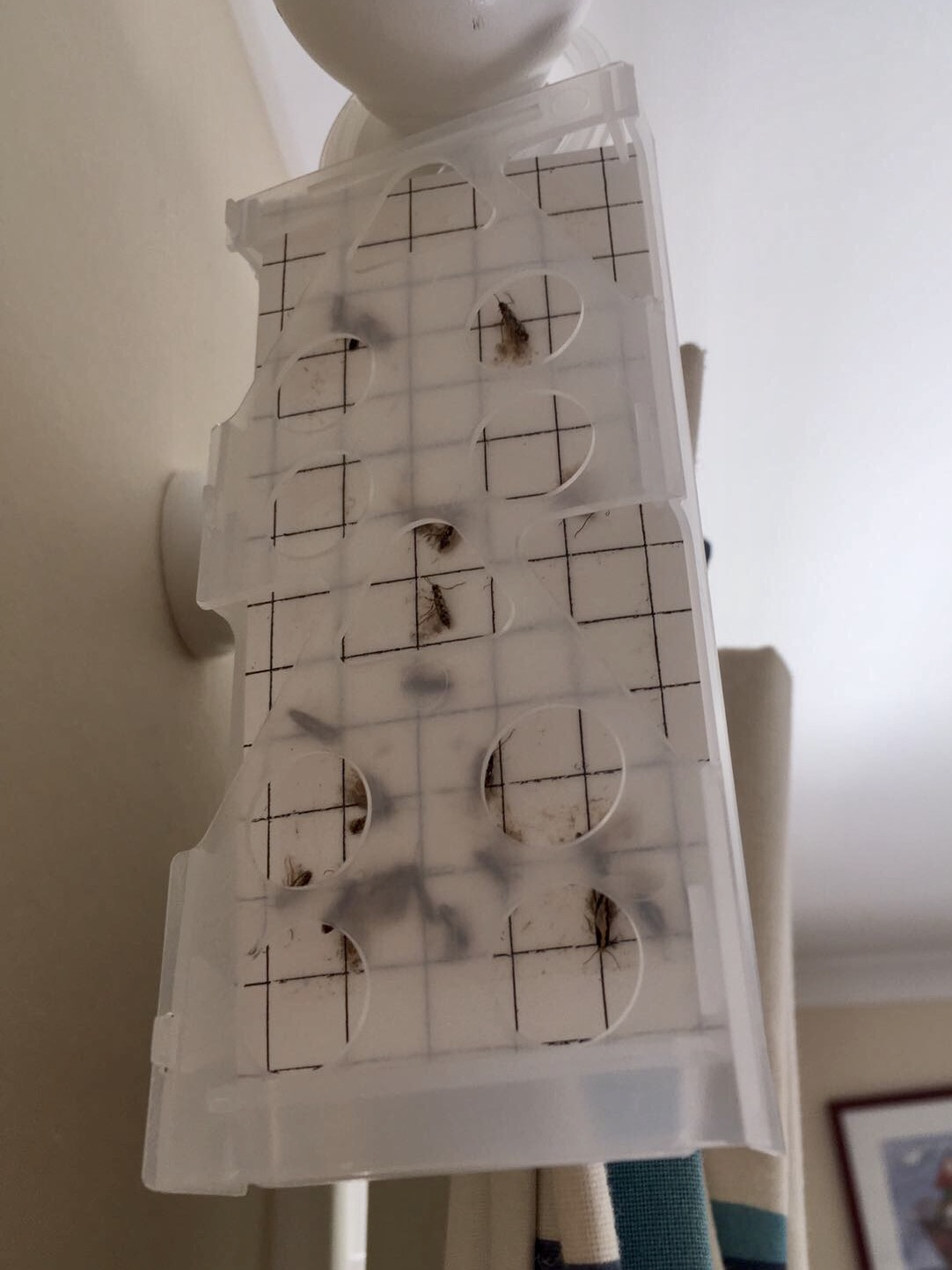 Moth trap - pest control winchester & Andover - Bentley Environmental