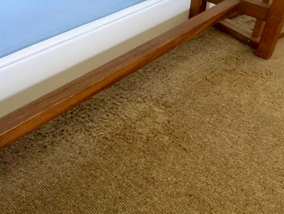 damage to carpets caused by moths