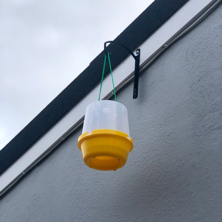 Suspended Wasp Trap