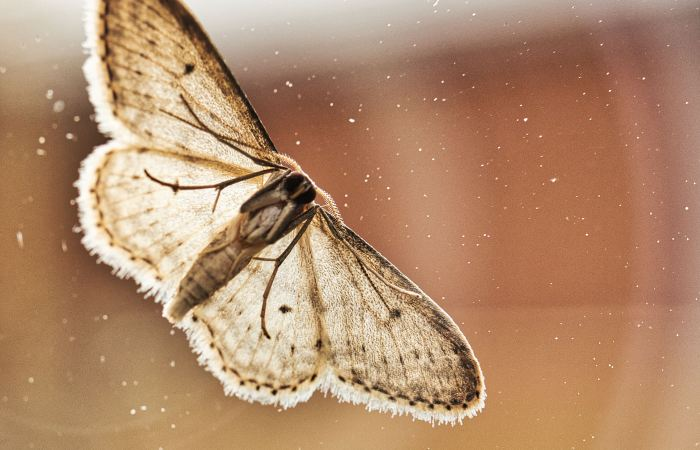 Moth control - Bentley Environmental - Pest Control
