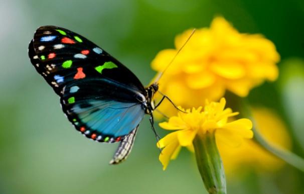 quello che per il bruco è la fine del mondo, per la farfalla è l'inizio della vita