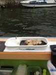 夏のカワハギ釣り、巳の助丸。鮎が釣れない関東東海、夏のカワハギ釣り。