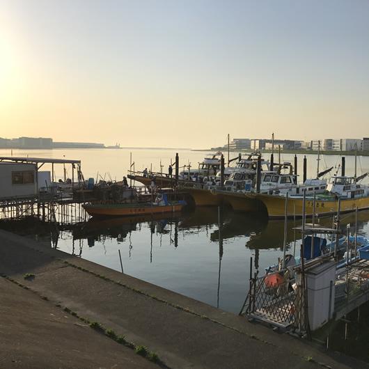 東京湾 トラフグ