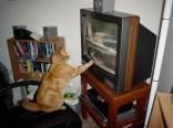 catsitter1