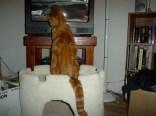catsitter2