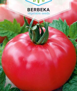 Pomidor Faworyt 1g