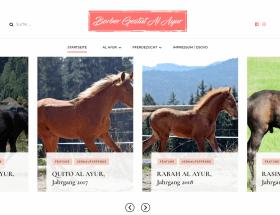 Design Screenshot Werbsite