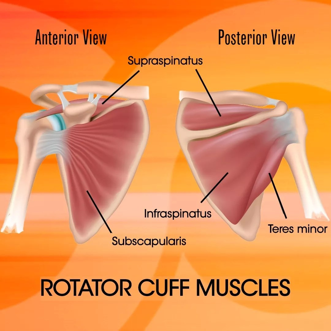 Rotator Cuff: Understanding And Strengthening
