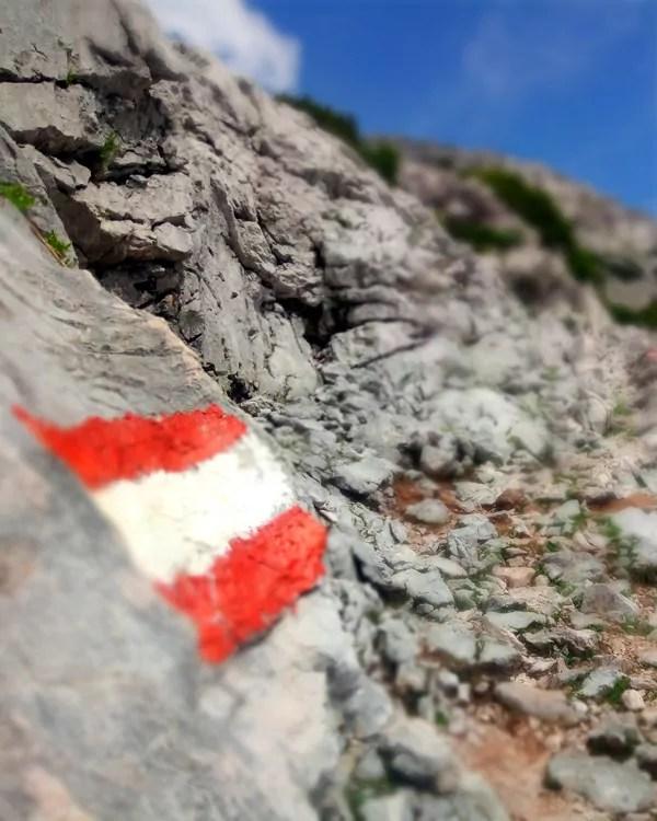 Bergtour mit Hund zum Rinnerkogel im Traunsee-Almtal