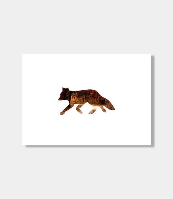 Amano fox