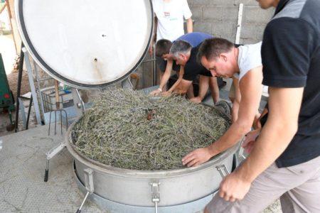 distillation de la lavande Quercy Rocamadour