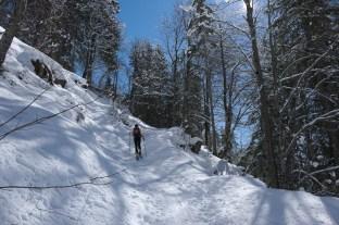 Durch den Wald zur Hackel-Hütte.