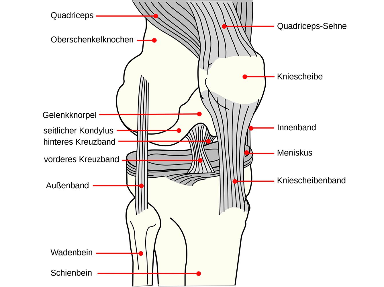 Knieschmerzen: Die Gründe für Knieprobleme – und was Sie dagegen tun können