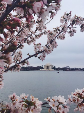 Tidal basin - Jefferson memorial