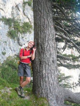 diesen Baum gilt es zu finden