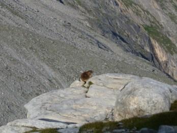 Das Murmele genießt die erste Morgensonne