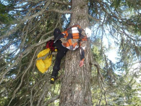 Verletzter-im-Baum