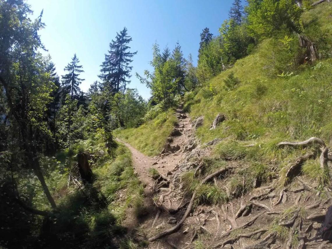 Aufstieg im Wald entlang der Zipfelsfälle