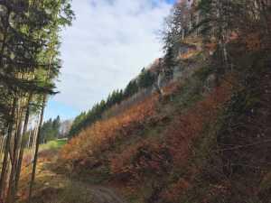 Forstweg in Richtung Falkenstein