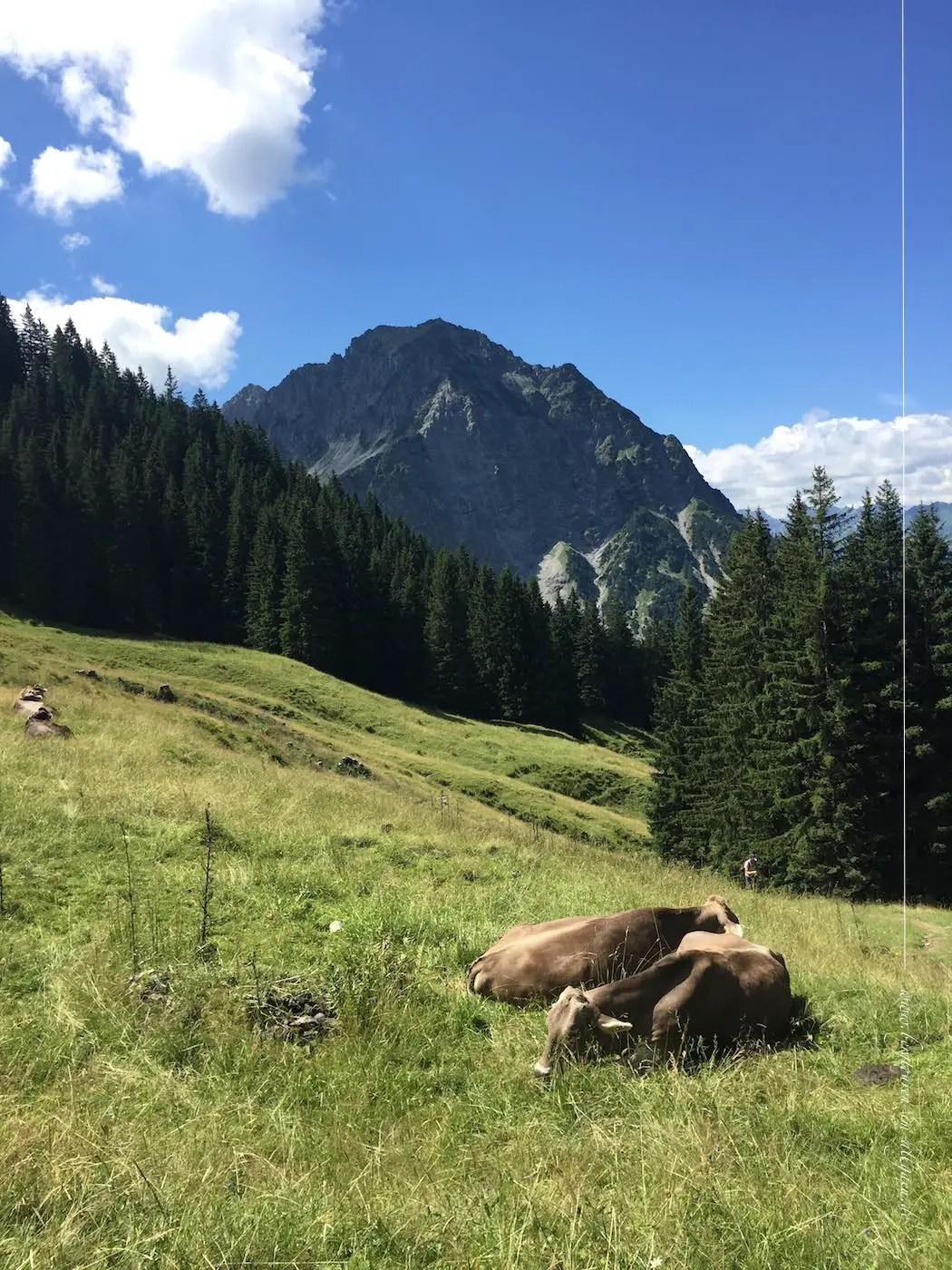 Aufstieg zum Falkenjoch mit Blick auf das Rubihorn