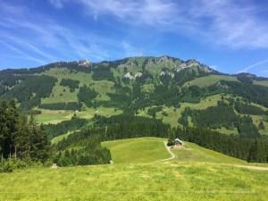 Abstieg vom Kapf zur Alpe Berghofer Wald