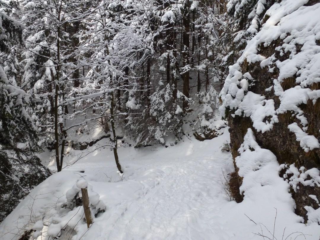 Durch den Wald zum Ahorn