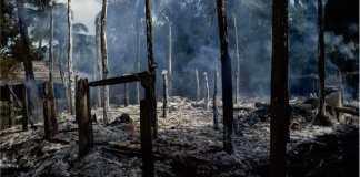 Krisis Ekologi