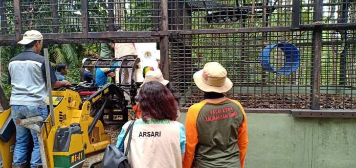 Orangutan Bento dan Iskandar