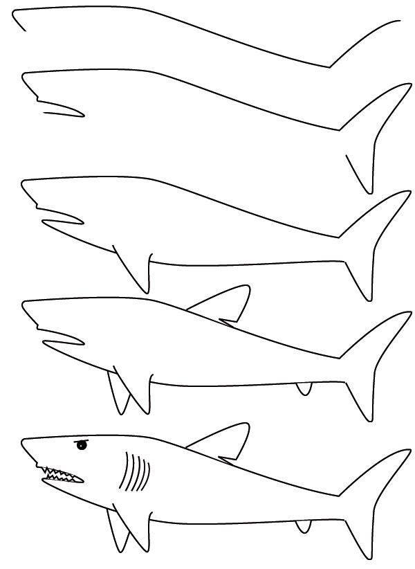 Cara Menggambar Binatang dengan Mudah
