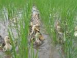 Memanfaatkan Gulma Dalam 1 Lahan Adalah Sahabat Petani Untuk Hasil Pertanian Lebih Baik