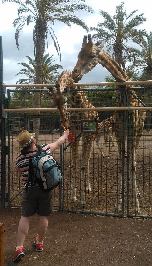 Giraffmatning