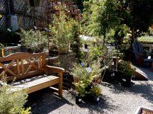 Home - Berkeley Horticultural Nursery