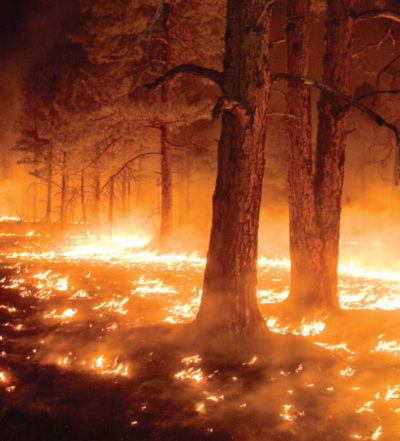 Certain fungi thrive in the wake of forest fires. Credit: Glia National Forest