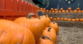 pumpkin carving swindon, october half term swindon, roves farm half temr