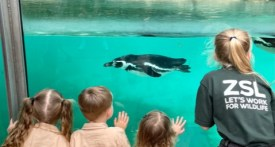 london zoo, zoos in london, days out with kids london, london zoo blog review