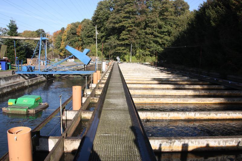 Potsdamer Binnenfischerei - Forellenanlage Gottow