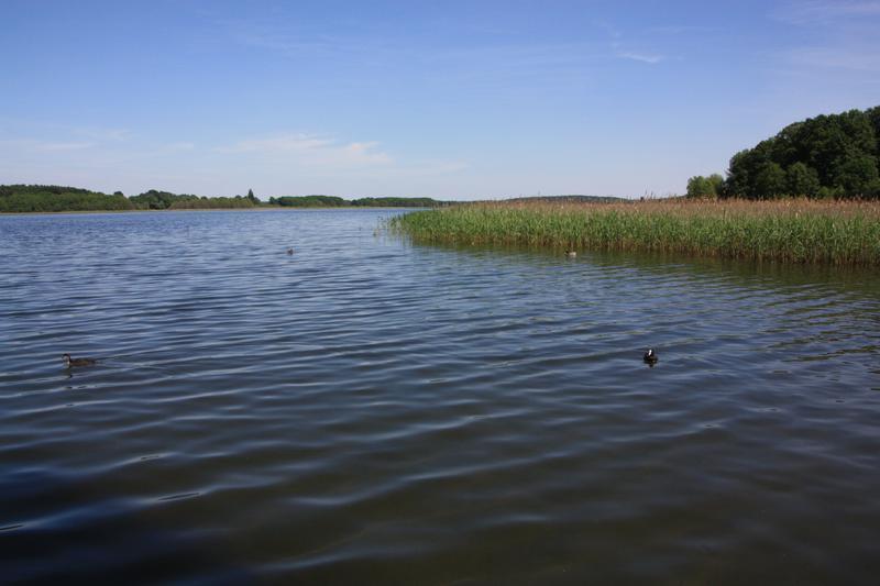 Binnenfischerei Postdam - Seddiner See