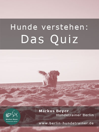 Quiz: Hunde verstehen