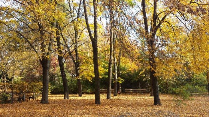 Kleiner Tiergarten, Moabit. Foto. Kirsten Andersen