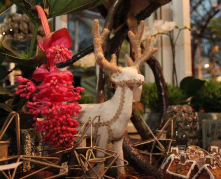 Jul i Königliche Gartenakademie