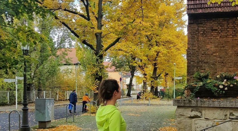 see fall foliage berlin