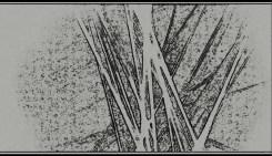Edelbauer Raphaela_Cinkl Corina - Mimikry. Bild: Josef Maria Schäfers.