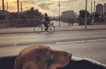 feature-berlinbike