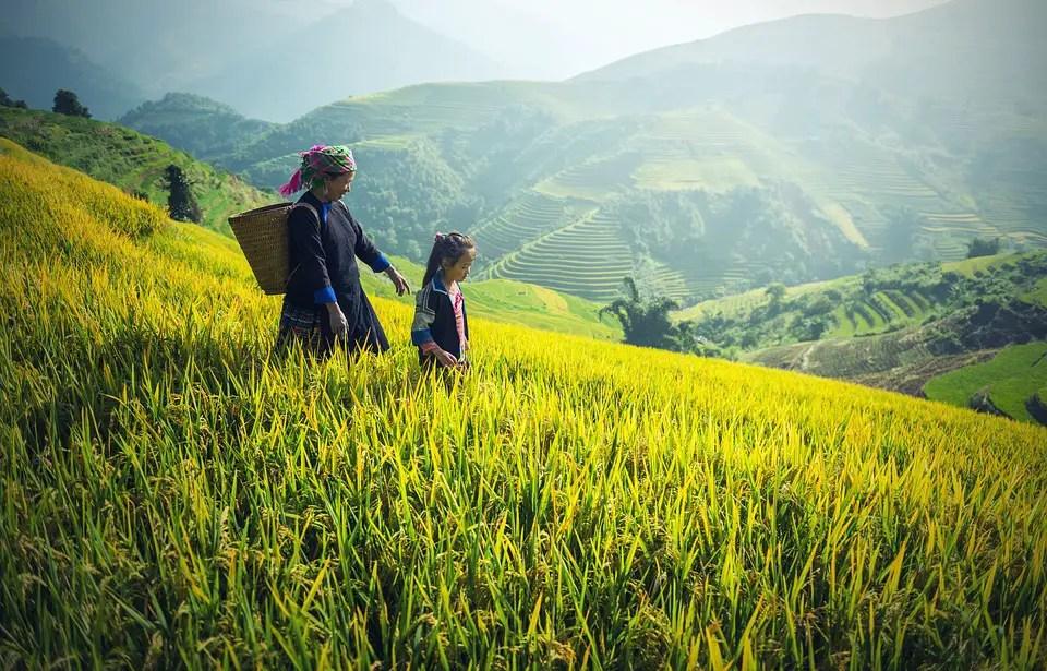 pixabay cc0 https://pixabay.com/en/agriculture-asia-back-black-1822446/