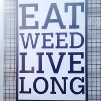 The Dutch Weedburger - Amsterdam