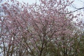 spring20