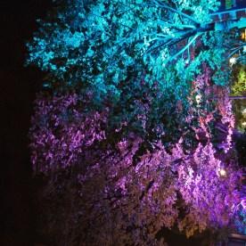 lichtfestival152